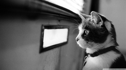 cat waiting